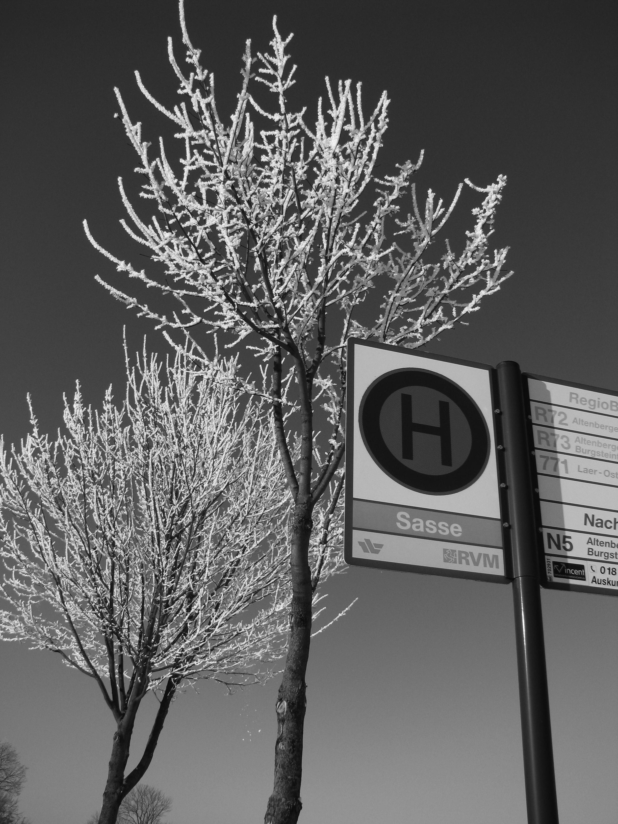 Bäume mit Bushalte
