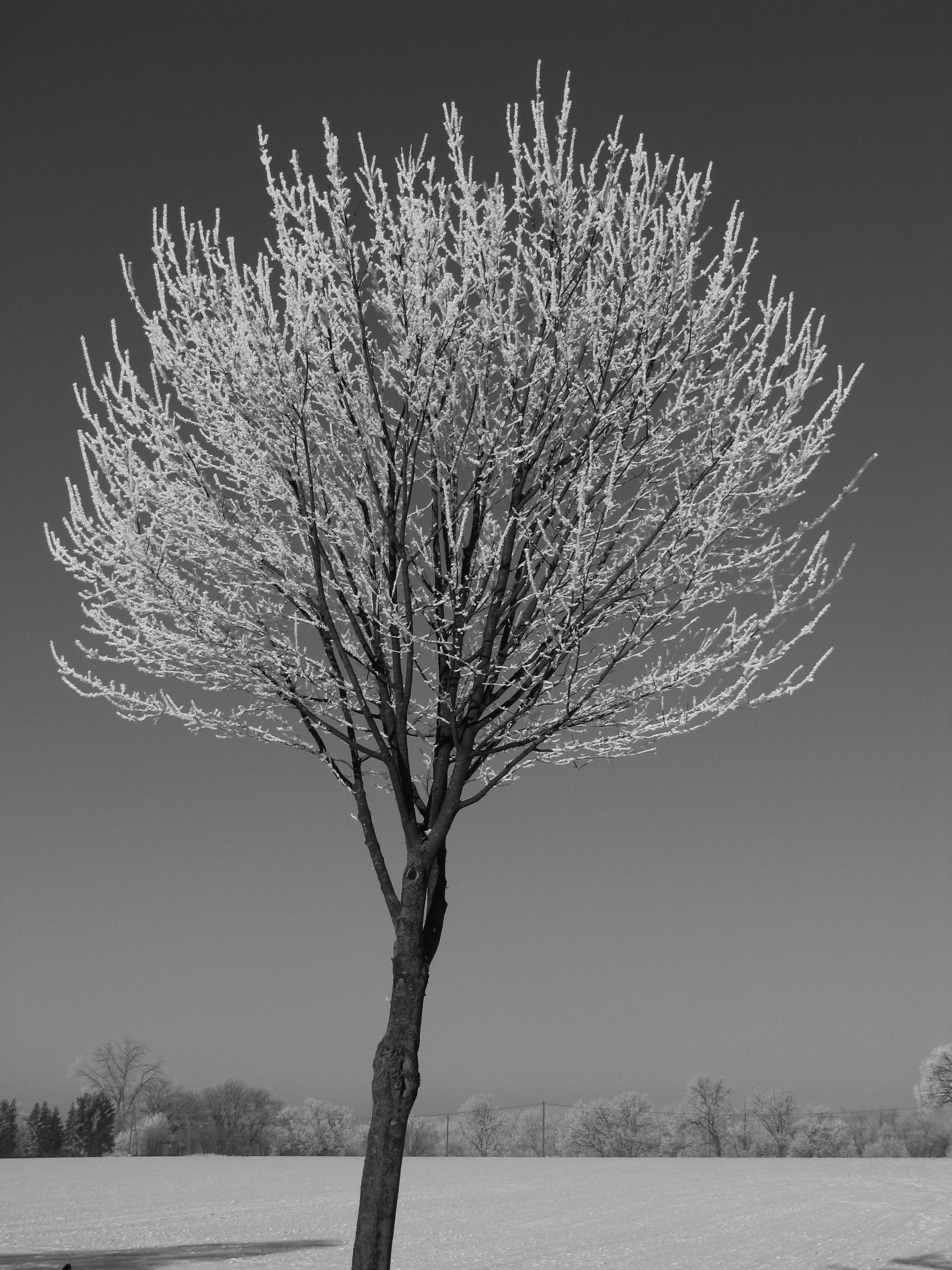 Einzelner Winterbaum